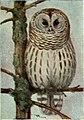 Nature Study Birds - A Book for Beginners in Bird Study (1911) (14565548199).jpg