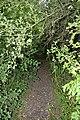 Naturschutzgebiet Haseder Busch - Im Haseder Busch (29).jpg