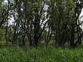 Naturschutzgebiet Heuckenlock 21.05.2014 Phase 58.JPG