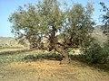 Navidhand new 303 - panoramio.jpg