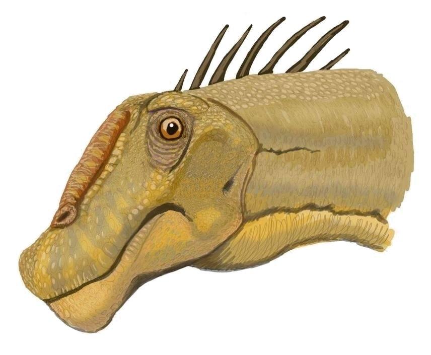 Nemegtosaurus DB