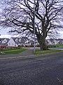New Houses - geograph.org.uk - 77001.jpg