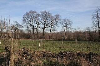 Afforestation Establishment of trees where there were none previously