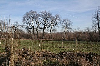 Afforestation - An afforestation project in Rand Wood, Lincolnshire, England