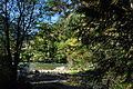 Newhalem, WA - Trail of the Cedars 19.jpg
