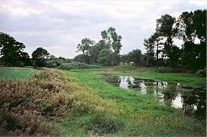 Newsham Abbey - Pond near site of Newsham Abbey