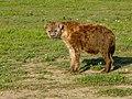 Ngorongoro (20) (13962142078).jpg