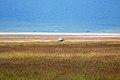 Ngorongoro 2012 05 30 2518 (7500993256).jpg