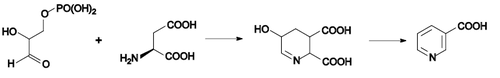 Nicotinic acid biosynthesis1.png