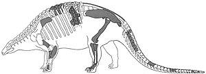 Nodosaurus - Historical reconstruction of the holotype skeleton from 1921