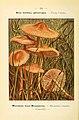 Nouvel atlas de poche des champignons comestibles et vénéneux (Pl. 34) (6459638567).jpg