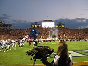 "War Eagle - ""Nova"", officially named ""War Eagle VII"", just after flying untethered above the stadium before Auburn's game versus South Carolina in 2010."
