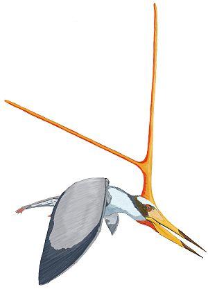 Pterodactyloidea - 50 px