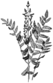 OFH-006 Flowering Fern.png