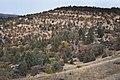Oak Woodland Hillside, Colestin Valley (6346102494).jpg