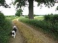 Oak growing on field boundary - geograph.org.uk - 1362308.jpg