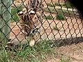 Oaklawn Farm Zoo, May 16 2009 (3538913773).jpg