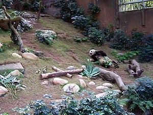 Ocean Park panda 2.jpg