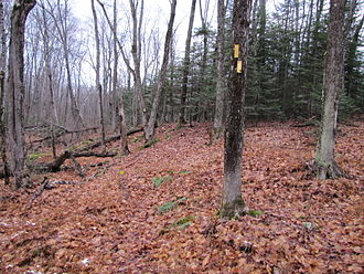 Voyageur Hiking Trail - Typical hardwood forest in fall along yellow-blazed loop trail