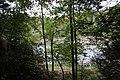 Ohiopyle State Park River Trail - panoramio (106).jpg