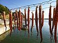 Oktopus im Hafen von Limenaria.JPG