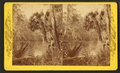 On the Oklawaha River, Fla, from Robert N. Dennis collection of stereoscopic views 2.png