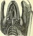 On the anatomy of vertebrates (electronic resource) (1866) (14753211044).jpg