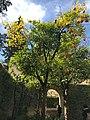 Orange Tree in Sivelle.jpg
