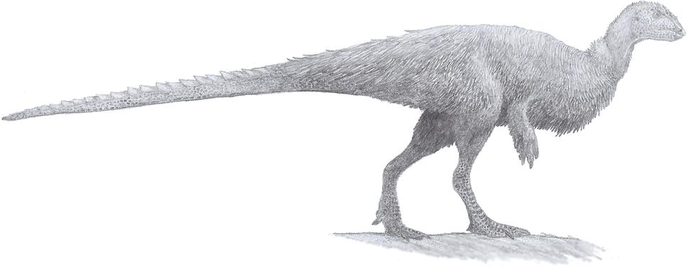 Orodromeus (pencil 2013)