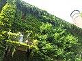 Orto botanico Brera a Milano 337.jpg