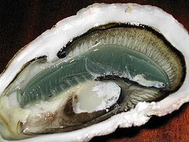 Ктенидії двостулкових молюсків