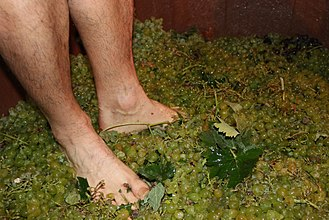 Grape treading - Grape stomping during the a traditional grape harvest festival in Spain.