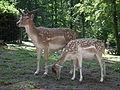 Paar im Wildpark.JPG