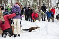 Pacific Fisher Release at Mount Rainier National Park (2016-12-17), 050.jpg