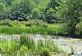 Pair of Swans in Marsh on Gottfredson Road, Superior Township, Michigan.JPG