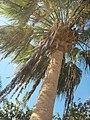 Palm, new tower - panoramio.jpg