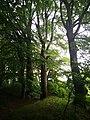 Památné stromoví Bransoudov 11.jpg