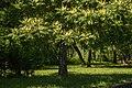 Park Sielecki Sosnowiec682.jpg