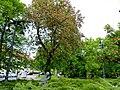 Park im Jana Kochanowskiego - panoramio (3).jpg
