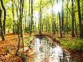 Park views in autumn (Netherlands 2011) (6311928842).jpg