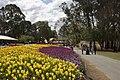 Parkes ACT 2600, Australia - panoramio (9).jpg