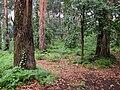 Parque Fundação Serralves woods (5735693707).jpg