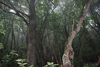 Parque Nacional Garajonay 3.jpg