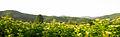 Pelagonia Plain 52.JPG