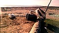 Pelicans resting on the beach near Pasni, Balochistan.jpg
