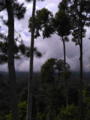 Pemandangan Gunung Salak.png