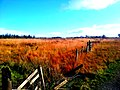 Perimeter fencing between Blackmoss and Buttries - panoramio.jpg