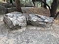 Petrified Redwood - Sequoia langsdorfii, Metasequoia - 2.jpg