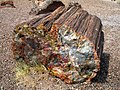 Petrified Wood in Arizona - 2009-09-03.jpg