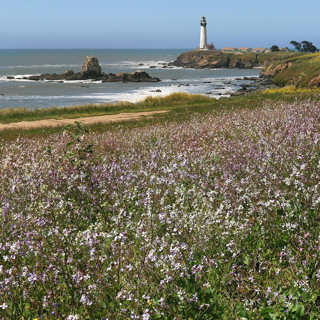 Pigeon Point Lighthouse and wildflowers